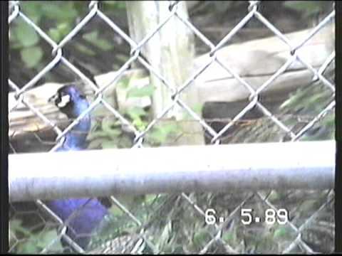 1989 Turtle Back Zoo
