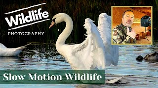 CANON SLOW MOTION SETTINGS 5D MK IV || UK WILDLIFE and NATURE Photography || Summer Leys