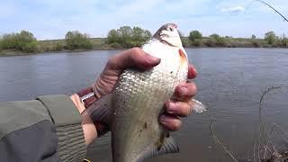 Рыбалка на фидер весной на реке Дон Ловля густеры на Дону в Липецкой области
