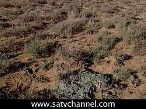 Great Karoo: SOUTH AFRICA TRAVEL