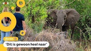 Onderzoek naar mysterieuze dood van 11 olifanten