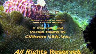 Bali Dive Safari Island Tracking Paul Ranky Copyright VideoClip19
