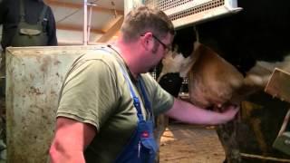 Vollautomatischer Milchviehstall