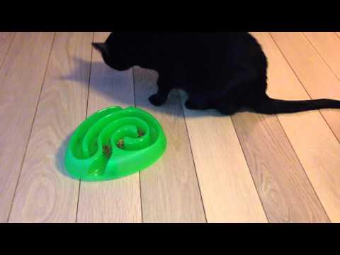Aktivering kat med Dogmaze mini