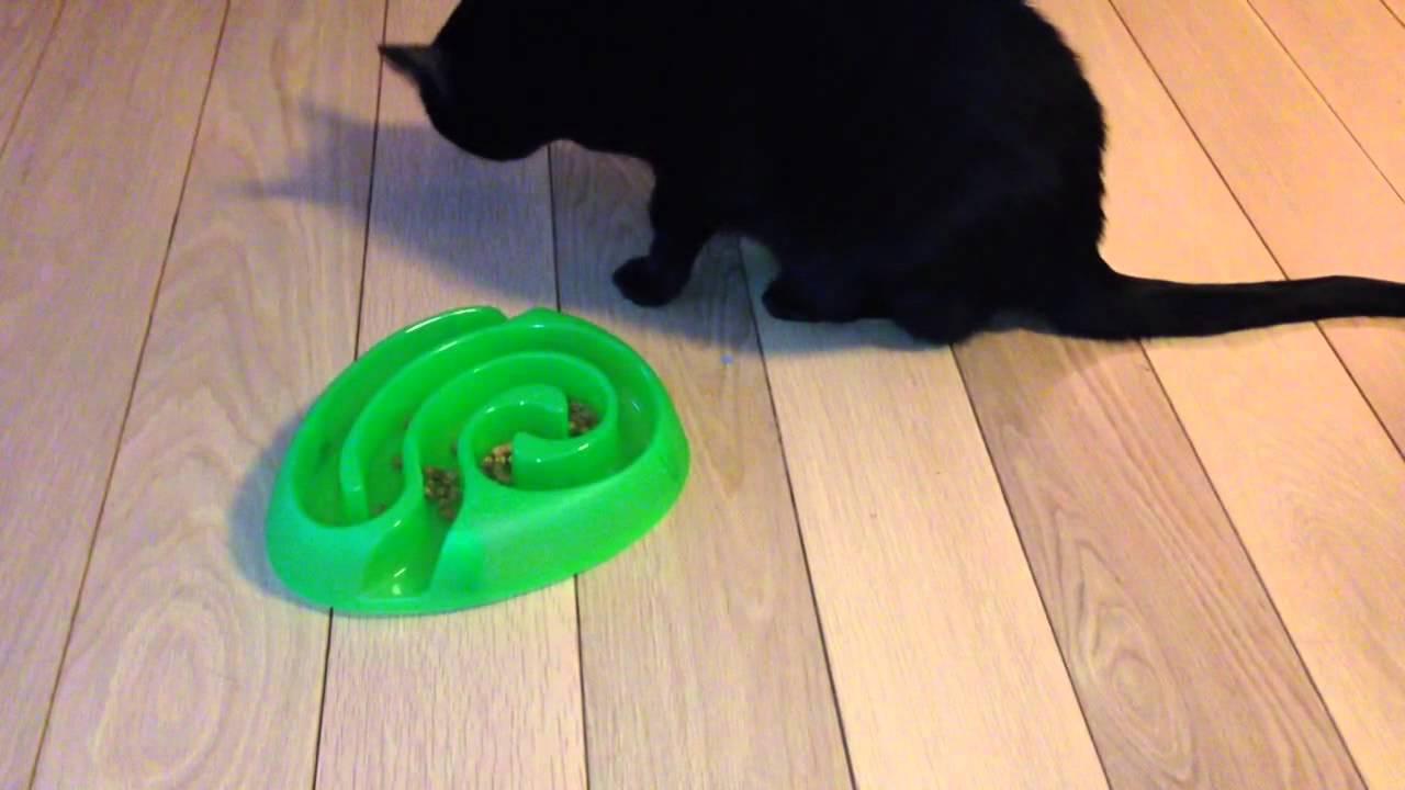 pasning af katte i eget hjem