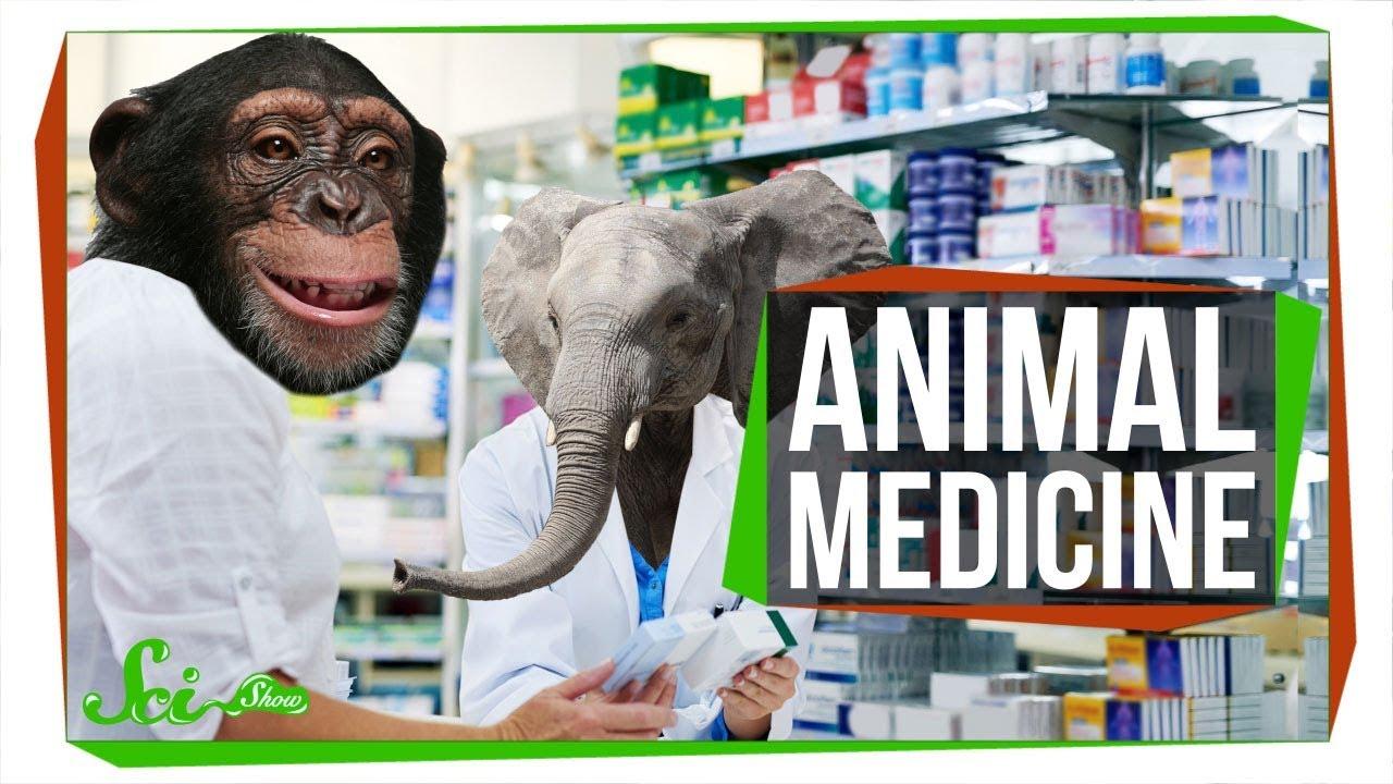 6 Natürliche Arzneimittel (möglicherweise), die von Tieren verwendet werden Zoopharmakognosie + video