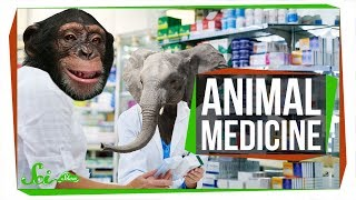 6 Natural Medicines (Maybe) Used by Animals | Zoopharmacognosy