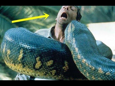 Assistir filme anaconda 4 dublado online dating 1
