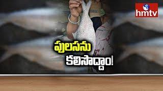 గోదావరి పులస చేపకు ఎందుకంత డిమాండ్..! hmtv Special Story On Godavari Costly Pulasa Fish