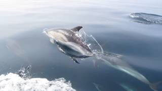 Pod of Dolphins in Cornwall just off the coast of Falmouth!!