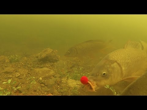 Aquaborne Underwater Feeder Carpfishing