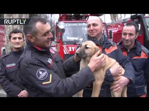 Lucky Puppy: Turkish firemen rescue dog from 70-metre well after 10 days