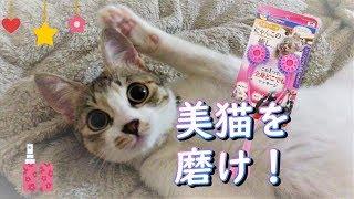 今回はミーティちゃんの美猫を磨こうと思います! #ニャンローラー でニ...