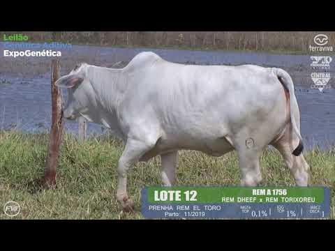 LOTE 12 - Leilão Genética Aditiva ExpoGenética 2019
