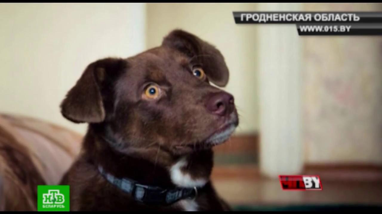 Из рук в руки животныесобаки база частных объявлений, минская обл.