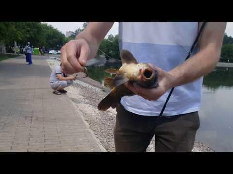 Рыбалка в Москве