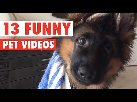 13 Hilarious Pet Videos Compilation 2016