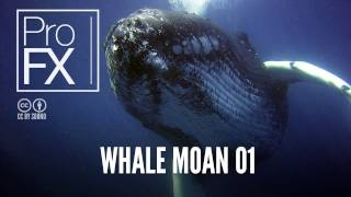 Whale moan sound effect | ProFX (Sound, Sound Effects, Free Sound Effects)