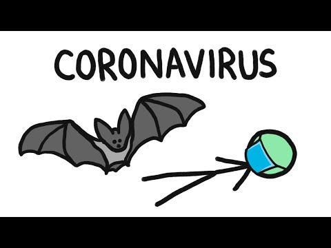 Why do Bats Transmit so many Diseases like Ebola?
