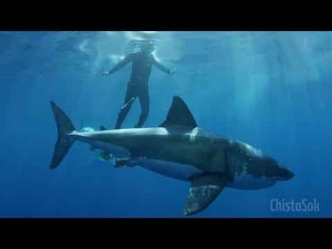 ТОП Самых Опасных Морских Обитателей Египта (HD)