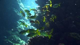 Exploring a coral reef labyrinth in the Red Sea