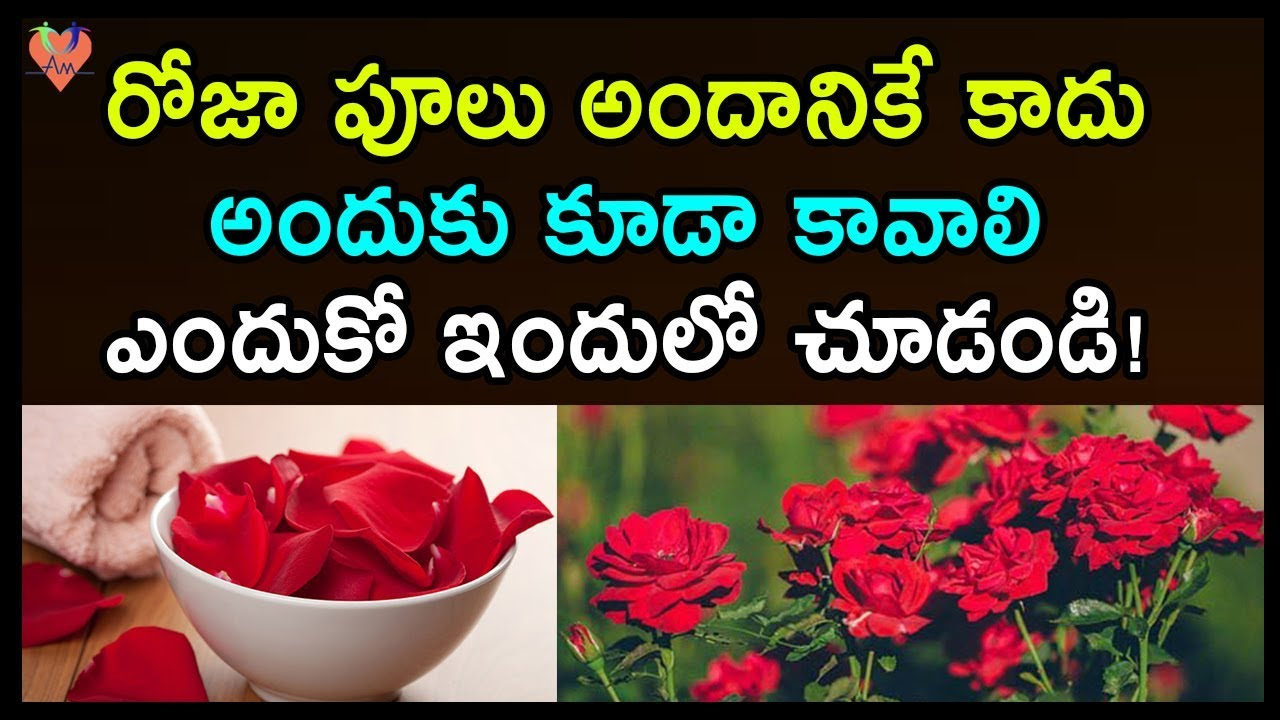 Health And Beauty Benefits Of Rose Petals Beauty Benefits Of Rose Petals Health Tips Telugu Youtube