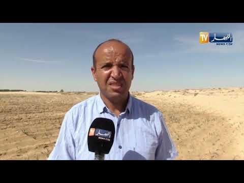 الوادي: السلجم الزيتي.. زراعة جديدة تستحق التشجيع بمنطقة كونين