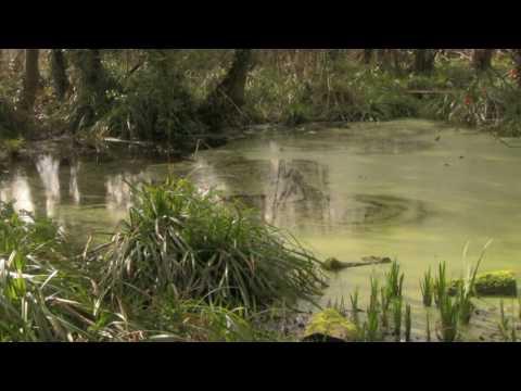 Medieval Fishponds, Park Farm, Thornbury [Bristol / South Gloucestershire]