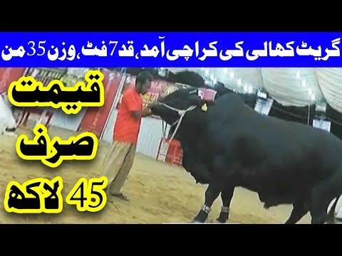 Karachi Ma Great Khali Ke Entry, Qaad 7 Feet, Wazan 35 Maan - Headlines - 12:00 AM - 17 Aug 2017