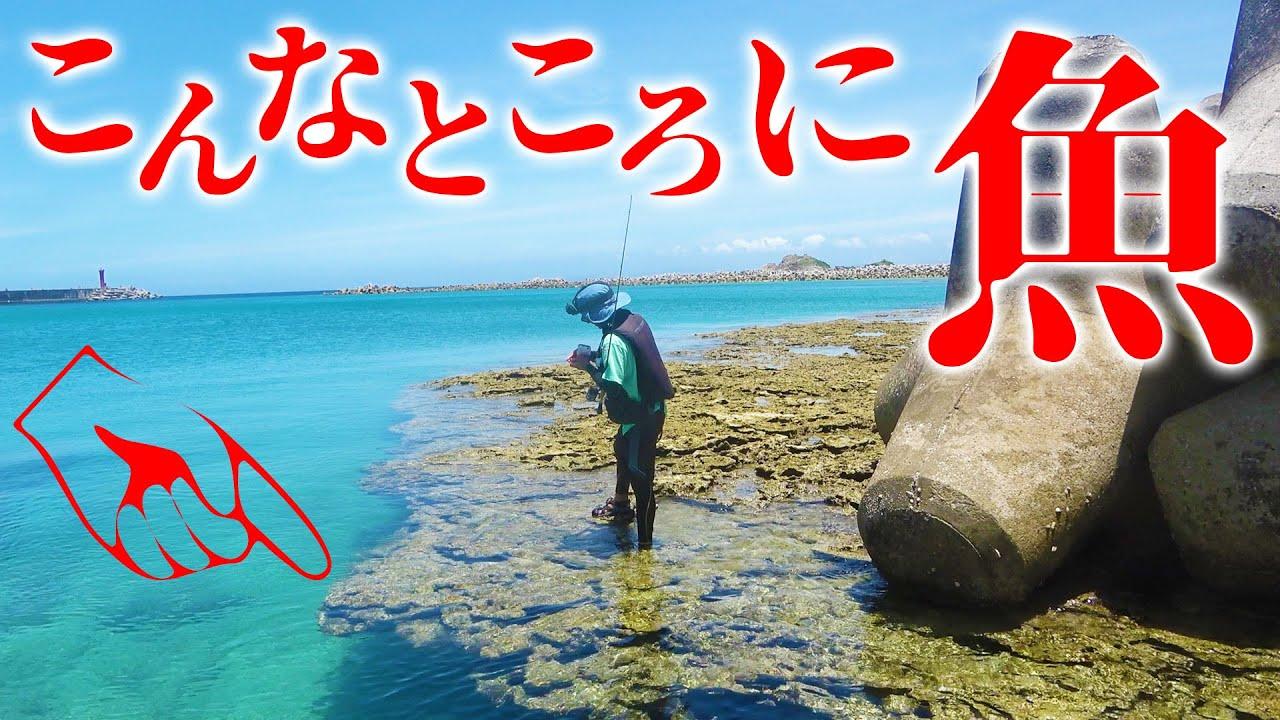 岩礁の屋根下に大量の魚が…⁉【伊是名島遠征2020 #4】