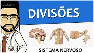 Gambar cover Sistema Nervoso 01 - Divisões  (Vídeo Aula)
