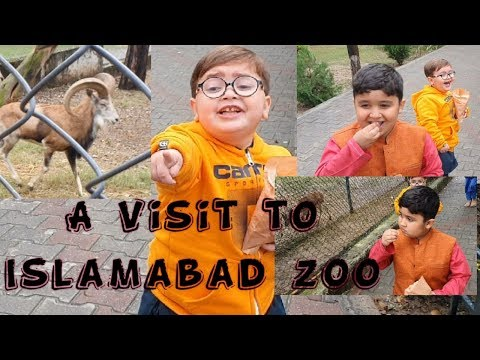 Cute Ahmad Shah Enjoyed In A Zoo Latest Video