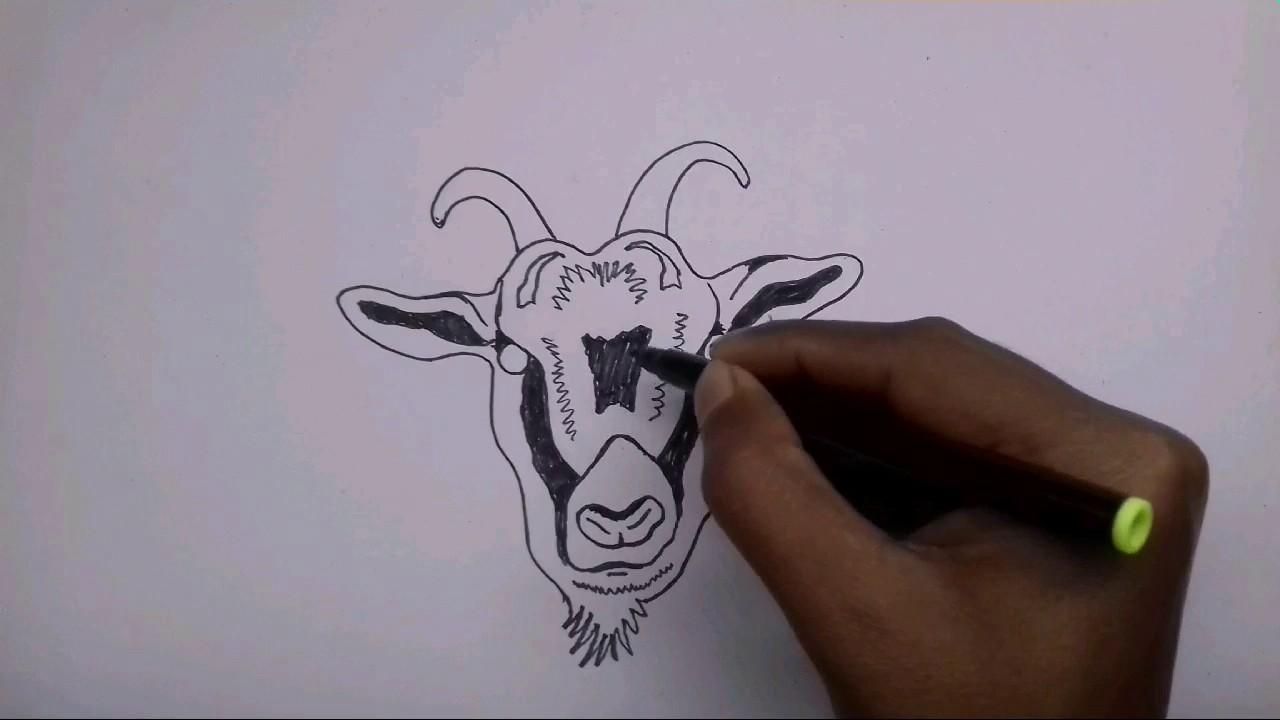 how to draw a goat face tribal