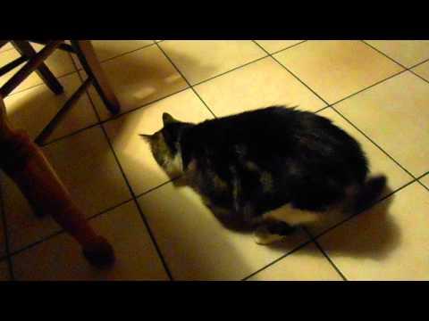Le chat Mozart
