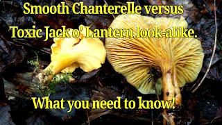 vindecați paraziții de chanterelle dacă