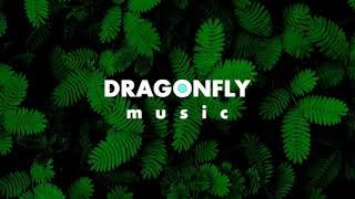 Dizaro - Aurora Borealis | 1 Hour Version