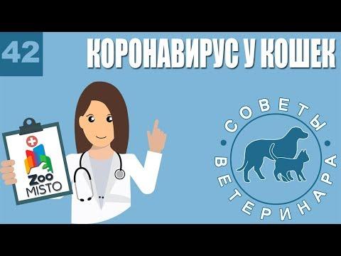 Коронавирус у кошек | Способы передачи | Симптомы и лечение болезни | Советы Ветеринара