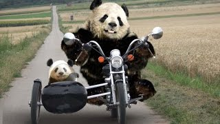 Дебилы и мотоцикл иж