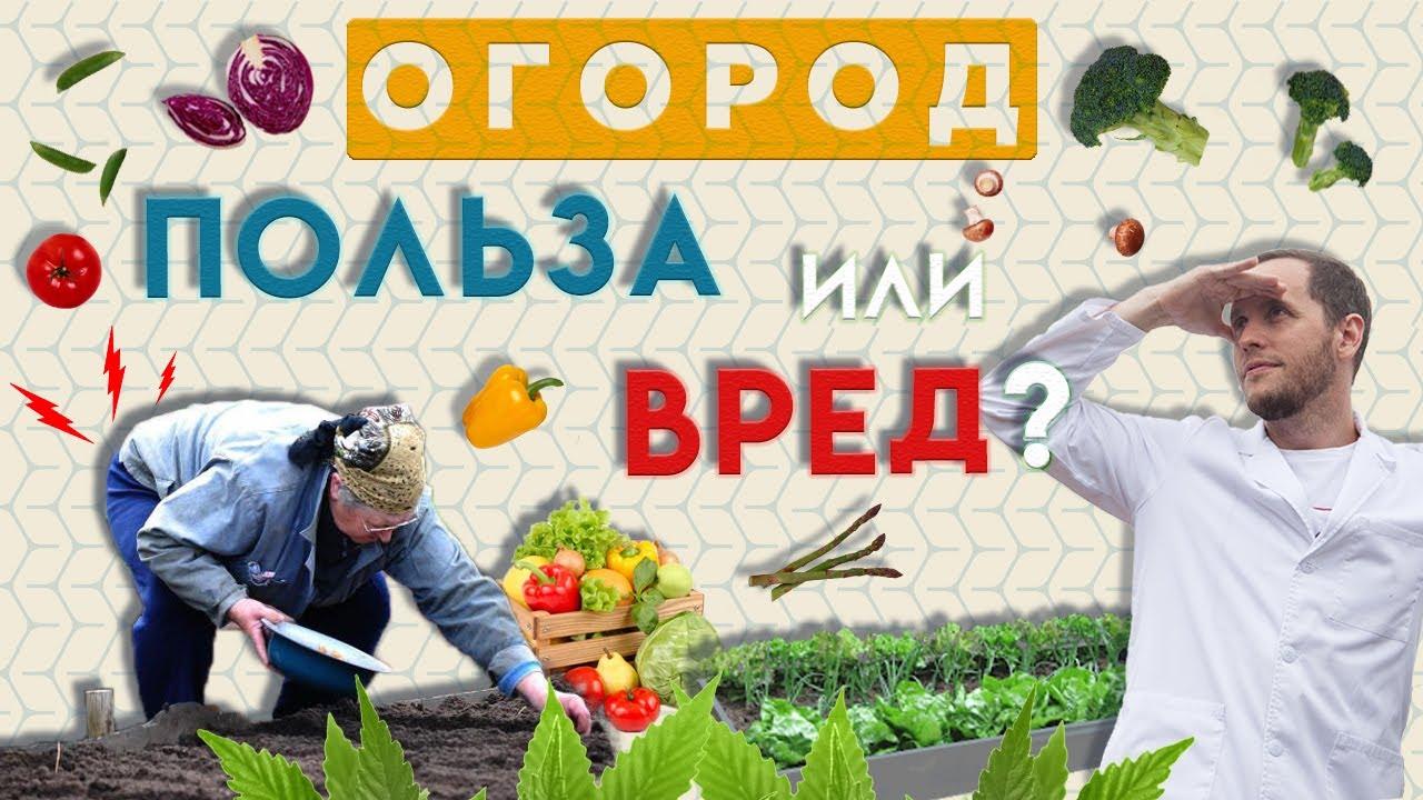 Огород – это полезно! | Как огород вредит пожилым людям | Доктор Епифанов