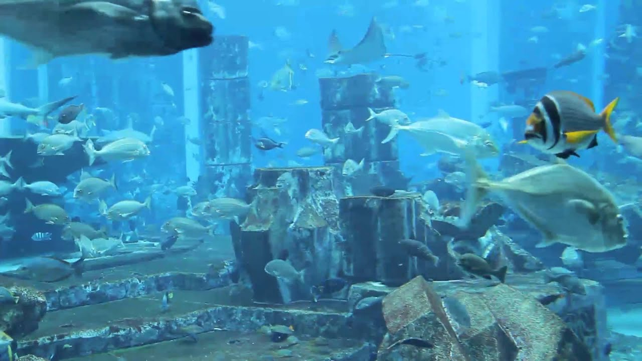 Aquarium atlantis hotel dubai youtube for Fish hotel tank
