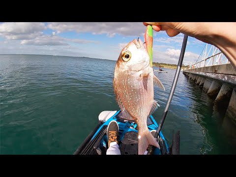 Geelong Waterfront PINKY SNAPPER MADNESS (Fishing Ep34)