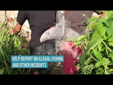Mekong Irrawaddy Dolphin Cambodia