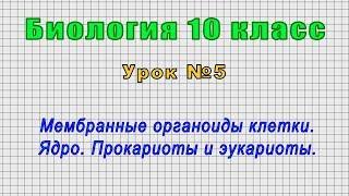 Биология 10 класс (Урок№5 - Мембранные органоиды клетки. Ядро. Прокариоты и эукариоты.)