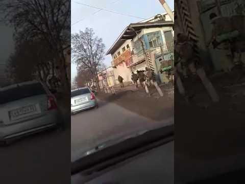 Simferopol, February 08, 2017
