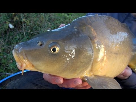 Carp Fishing With Meat -