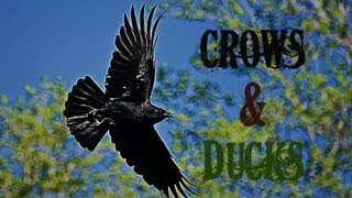 2013 Oregon Crow & Duck Hunt