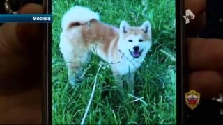 Москвичка, подозреваемая в живодерстве, показала свою собаку