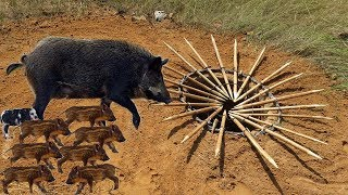 Primitive Technology: Amazing Quick Wild Pig Trap By Deep Hole Traditional Trap (100% Works)