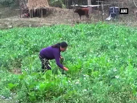 Sikkim puts renewed thrust to promote organic farming