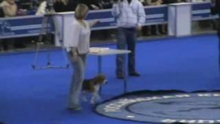 DogStatus.ru: Евразия-2010-1. Бэст Ин Шоу